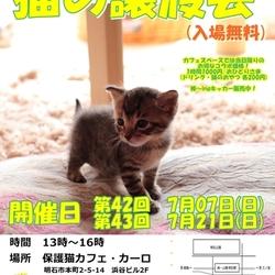 明石【猫の譲渡会】猫まみれwithカーロ 第42回