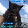 可愛い黒子猫♂兄妹4匹で収容 008