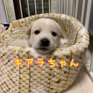 お目目パッチリ キアラちゃん