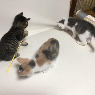 可愛い子猫3きょうだい