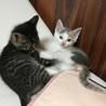 可愛い子猫3きょうだい サムネイル2