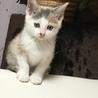 可愛い子猫3きょうだい サムネイル3