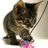 可愛い子猫3きょうだい サムネイル5