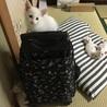 白猫子猫 サムネイル2