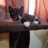 白黒 仔猫 おそらく雄猫 サムネイル3