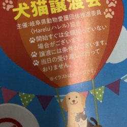 岐阜トヨペット恵那店 5th Thanks Fair わんにゃん・わんわん譲渡会 サムネイル1