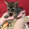 子猫 サムネイル3