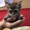 子猫 サムネイル4