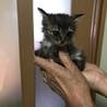 子猫 サムネイル5