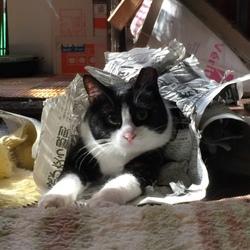 猫の手貸してよ〜 (;´д`)