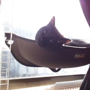 窓につけるキャットラックでお日様に溶けるはくちゃ。