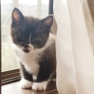 白黒 仔猫 おそらく雄猫