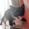 白黒 仔猫 おそらく雄猫 サムネイル5