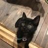 黒猫姉妹 ちょっぴり控えめな甘えん坊レンちゃん サムネイル2