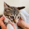 まん丸おメメのレイちゃん…3ヶ月 サムネイル2