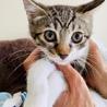 まん丸おメメのレイちゃん…3ヶ月 サムネイル7