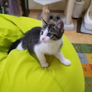 元気印の子猫くん☆【生後2ヵ月】