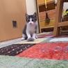 元気印の子猫くん☆【生後2ヵ月】 サムネイル2
