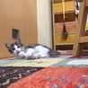 元気印の子猫くん☆【生後2ヵ月】 サムネイル3