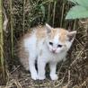 相談中☆家の裏に猫さん親子が現れました サムネイル2