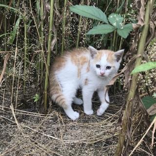 相談中☆家の裏に猫さん親子が現れました