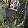 相談中☆家の裏に猫さん親子が現れました サムネイル3