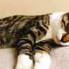 8ヶ月 子猫 ♂ サムネイル2
