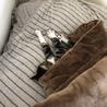 8ヶ月 子猫 ♂ サムネイル3