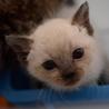性格◎シッポのクセが凄い兄弟猫 サムネイル2