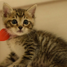 性格◎シッポのクセが凄い兄弟猫 サムネイル3