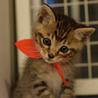 性格◎シッポのクセが凄い兄弟猫 サムネイル4