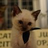 性格◎シッポのクセが凄い兄弟猫 サムネイル5