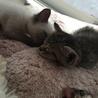 性格◎シッポのクセが凄い兄弟猫 サムネイル6