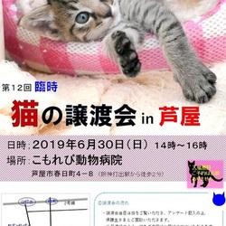 猫の譲渡会in芦屋 ¨ 猫のミーナ ¨