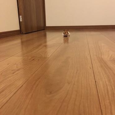 毎晩、廊下をお散歩します。