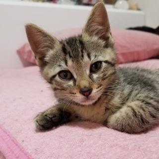 野良猫繁殖地域にいた子猫です⑬『トムくん(仮名)』