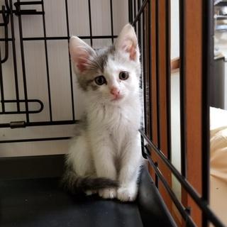 野良猫繁殖地域の子猫です⑭『ぐんちゃん(仮名)』