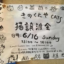 阪神尼崎 猫の譲渡会~inきのくにや~