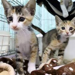 三重県津市 6月23日(日)ほんわか猫な日々子猫の譲渡会