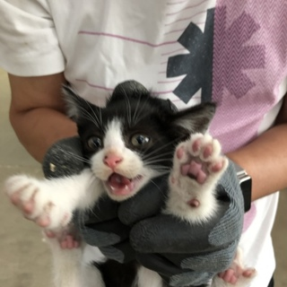 子猫ちゃんもらって下さい