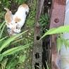 相談中☆家の裏に猫さん親子が現れました サムネイル4