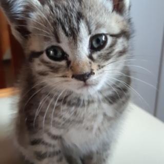 キジの子猫ちゃんの里親探してます。