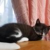 白黒 仔猫 おそらく雄猫 サムネイル6
