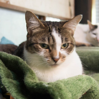 一人暮らしの高齢者の猫・人慣れしています