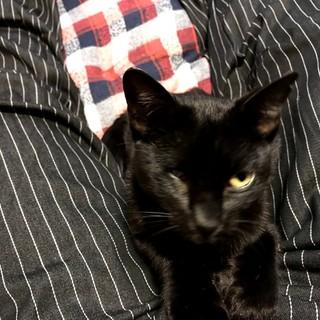 甘えん坊で、非情に人懐っこい黒猫です