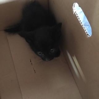 人懐こい可愛い子猫ちゃんと暮らしませんか?