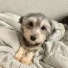 ミックスの男の子5ヶ月の子犬