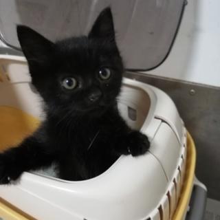 田舎で産まれた黒猫ちゃん♪