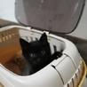 田舎で産まれた黒猫ちゃん♪ サムネイル4