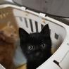 田舎で産まれた黒猫ちゃん♪ サムネイル5